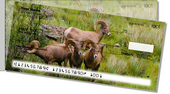 Big Horn Sheep Side Tear Checks
