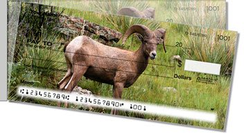 Big Horn Sheep Side Tear Design Checks